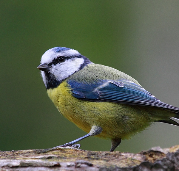 early-bird-gets-worm